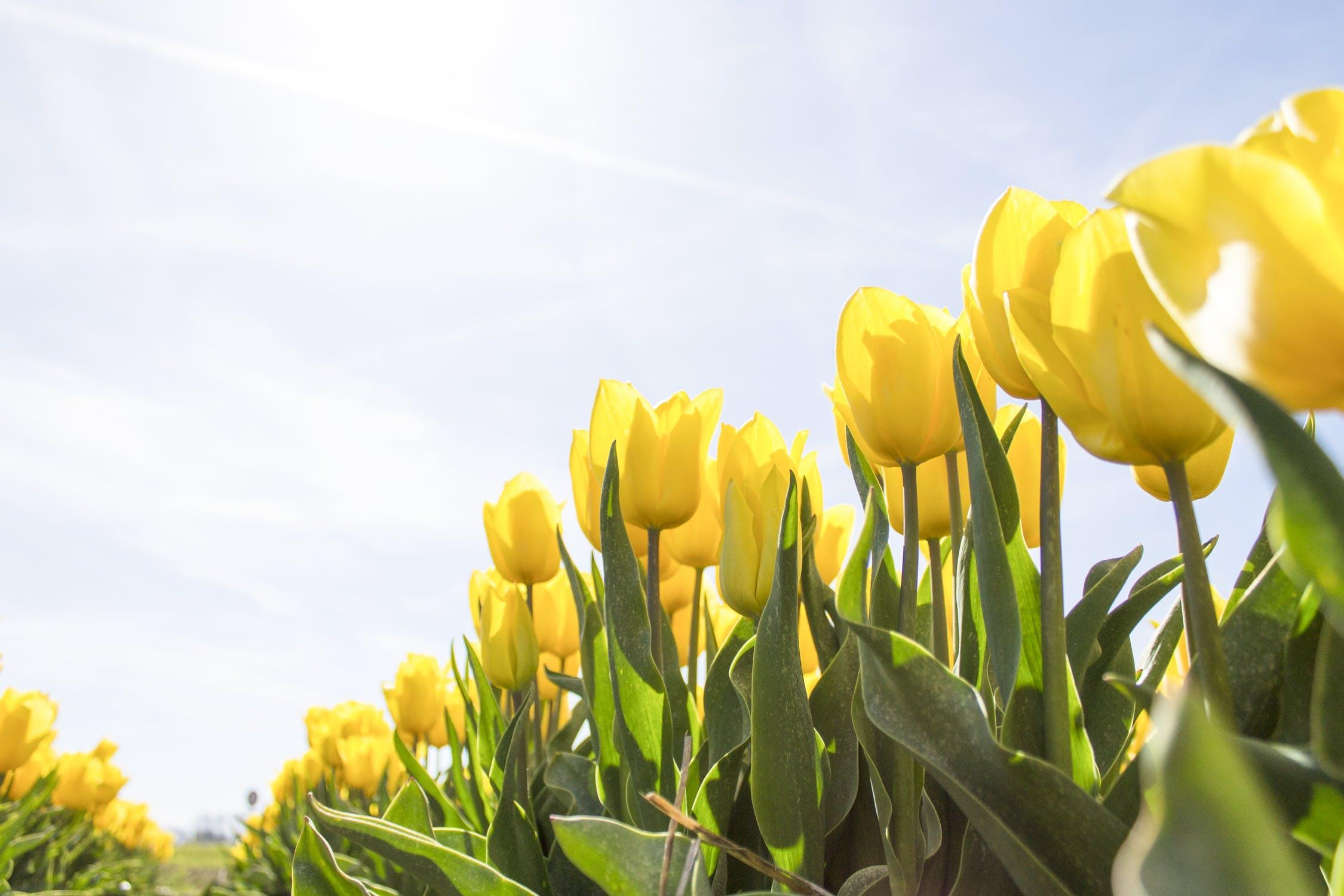 Heerlijk lente weer, betekent drukte bij tuincentra