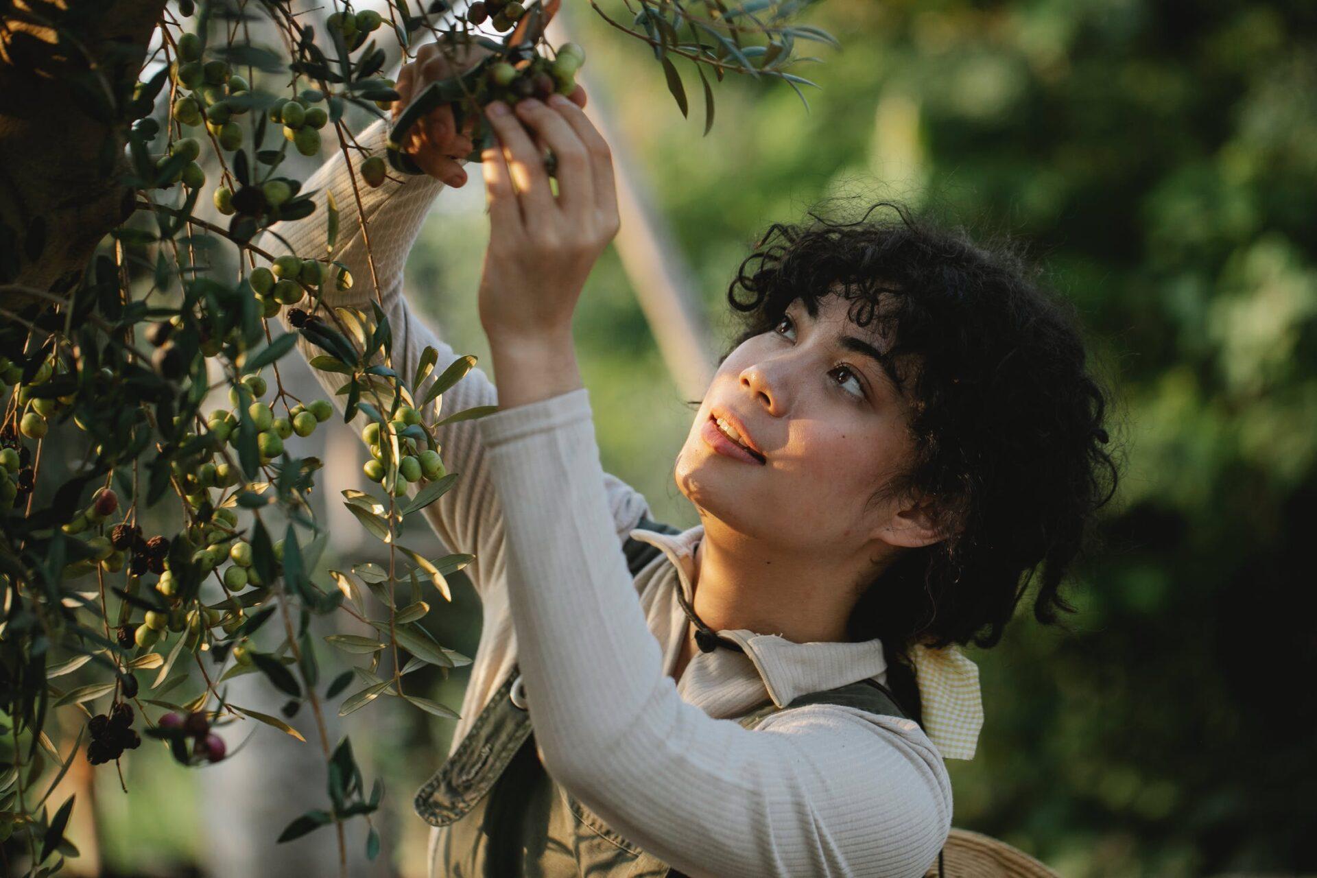Hoe bescherm je het beste jouw olijfboom in de winter
