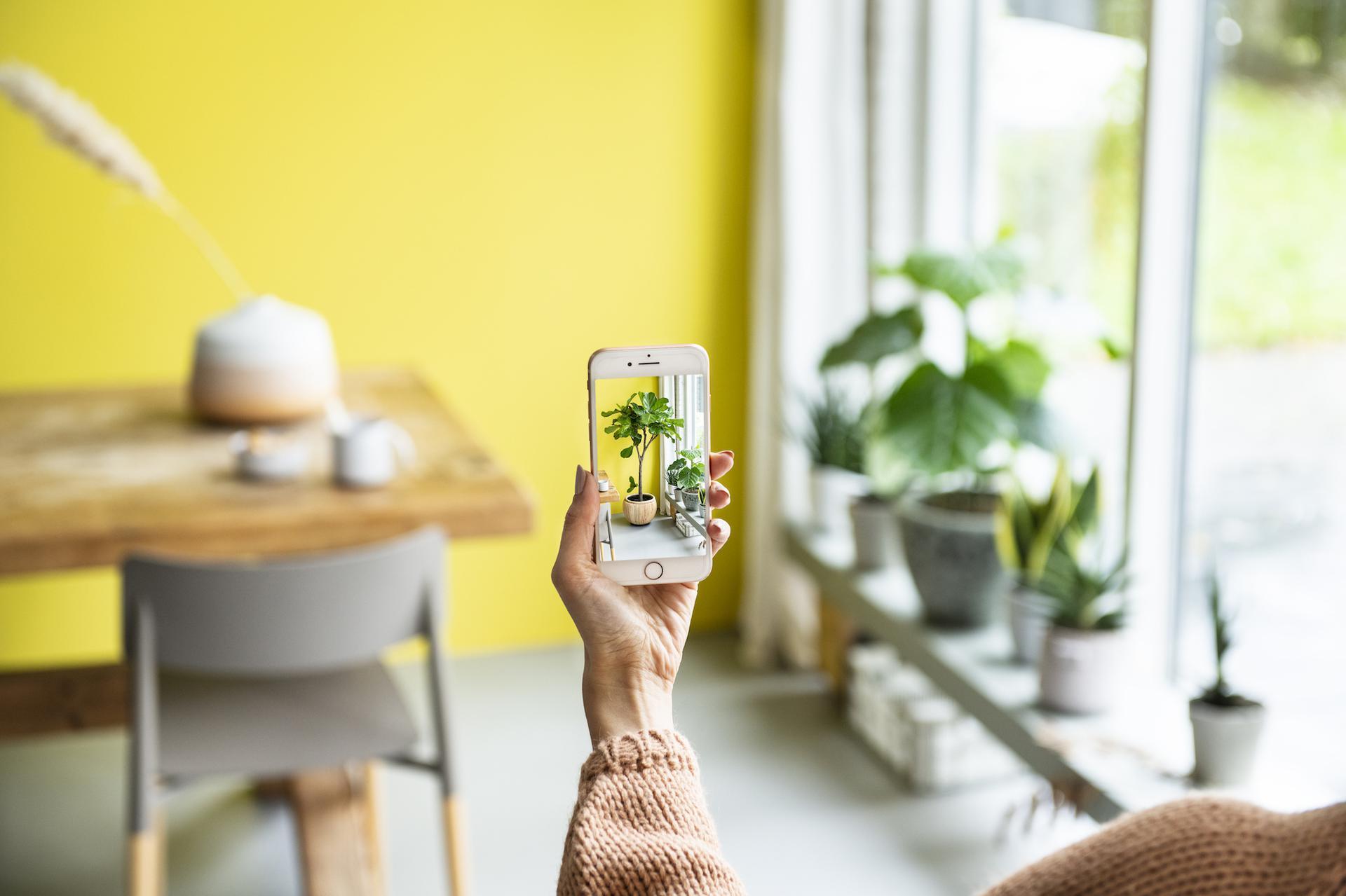 Intratuin komt met reality app voor kamerplanten