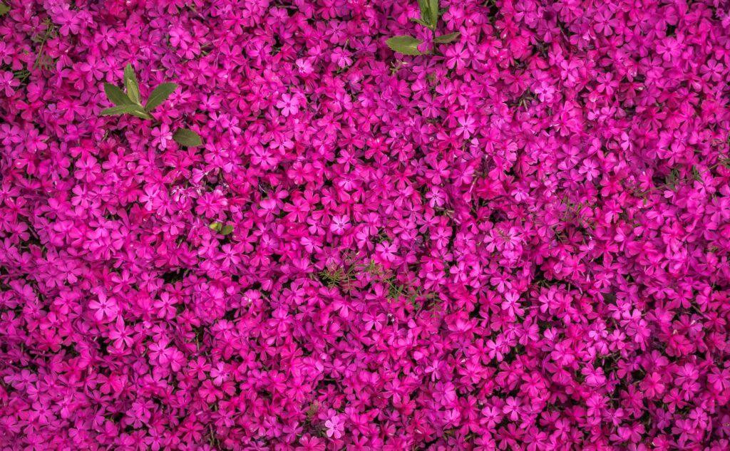 Intratuin weert grootste gedeelte giftige planten uit tuincentrum