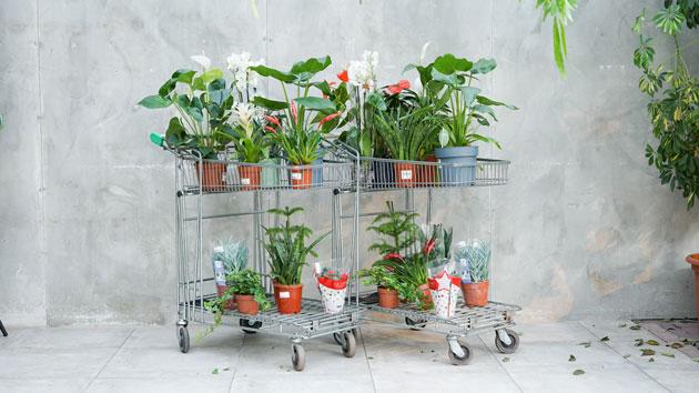 Planten met 50% korting bij Groenrijk Tilburg