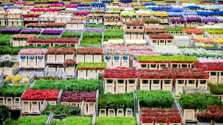 Waar moeten alle planten naar toe, nu tuincentra dicht zijn tijdens lockdown